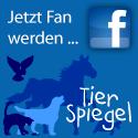 Jetzt Fan werden bei Facebook - tierspiegel.de
