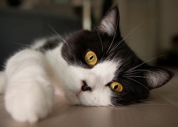 Optimale Katzenernährung nach der Kastration