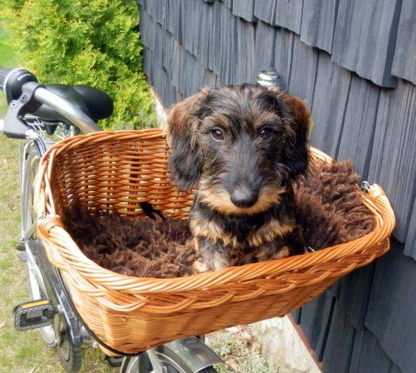 Fahrrad und Hund: Diese Zusatzkosten erwarten Sie in deutschen Öffis