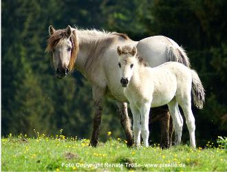 PFERDERECHT -  Wenn ein Pferd ein anderes Pferd verletzt