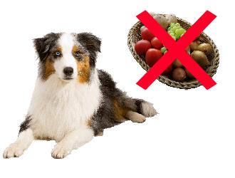 Damit die Osterfeiertage auch für Hunde ungefährlich bleiben