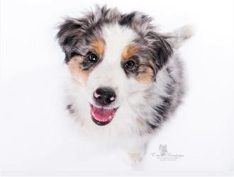 Hundehaftpflicht im Test: Diese Versicherungen schneiden am besten ab