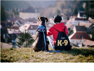 UMFRAGE mit Gewinnspiel von Julius-K9®: Was ist das charakteristische in der Beziehung zu deinem Hund?