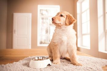 Ist Getreide im Futter schädlich für Hunde?