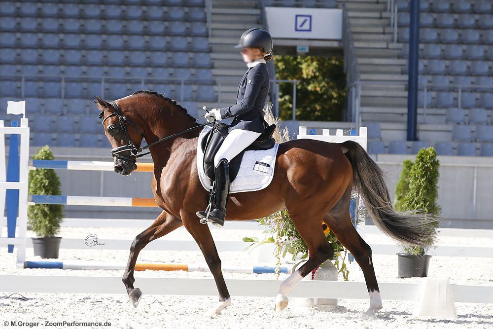 Familienpferd statt Sportgerät – das sind arabische Pferde!