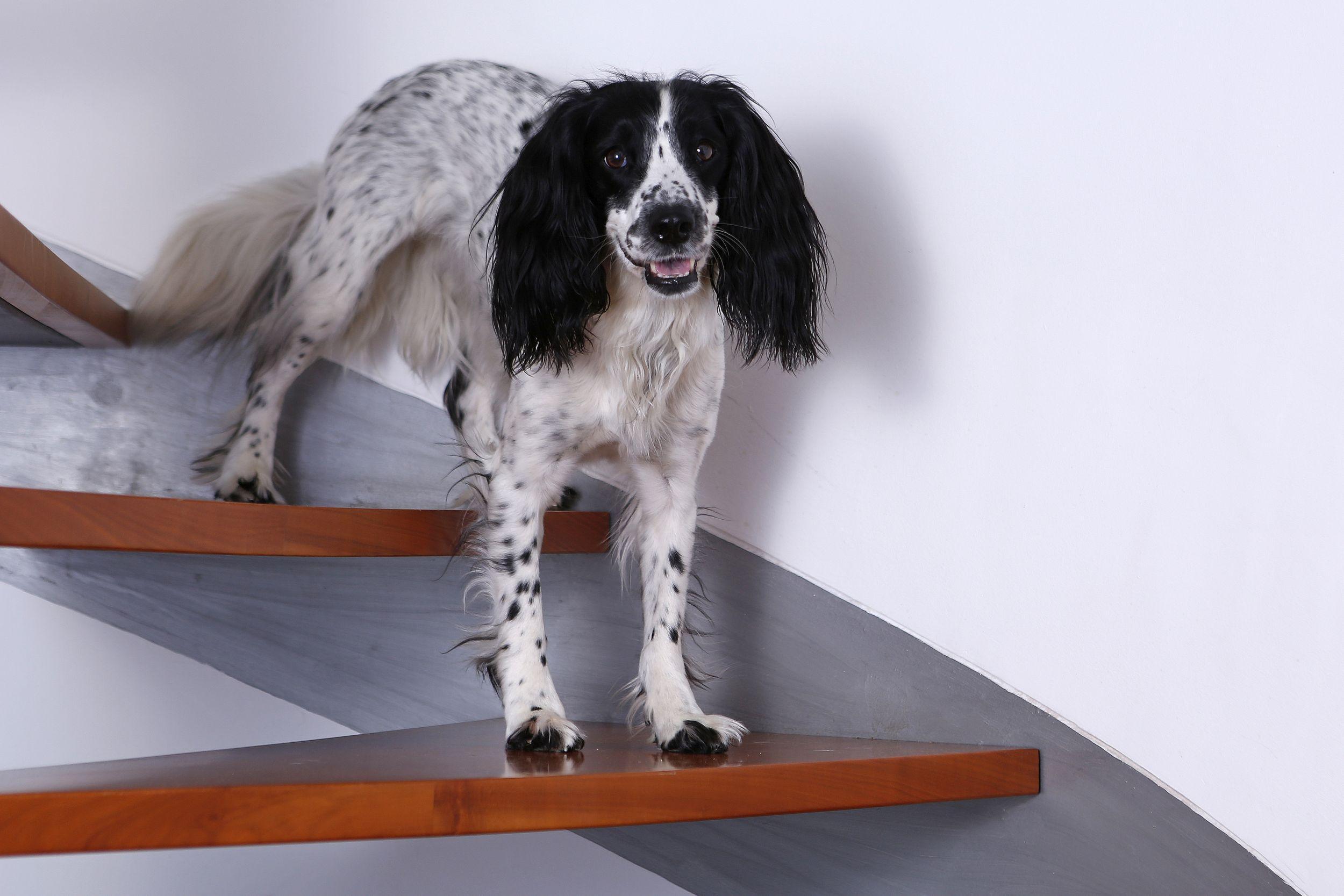 Arthrose beim Hund – (k)ein unabänderliches Schicksal?!