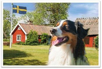 Ferien mit Hund – ein tierisch guter Urlaub