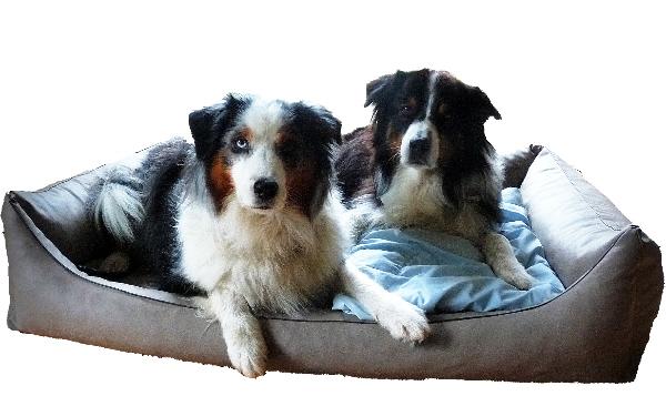 Hundebetten sollen bequem und robust sein!