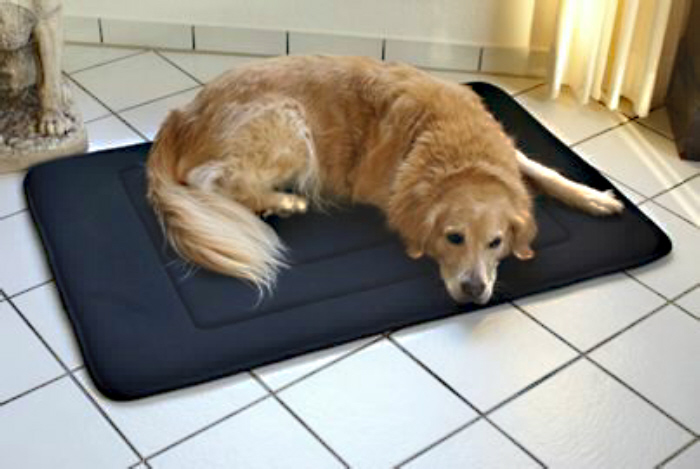 Warum muss es das AIR-BED für Hunde von SALUCURA sein?