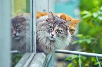 BOZITA Feline Funktion– Das schwedische Katzenfutter für jede Lebenslage