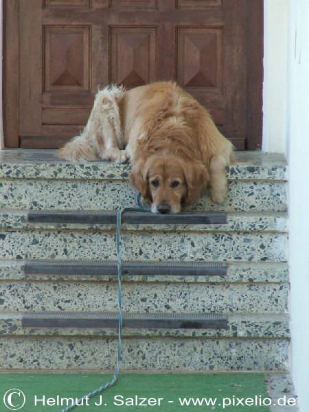 Treppensteigen Mit Hund