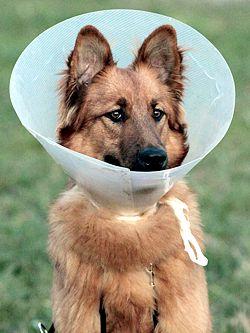 Allergische Hauterkrankungen Bei Hunden Und Katzen Homöopathisch